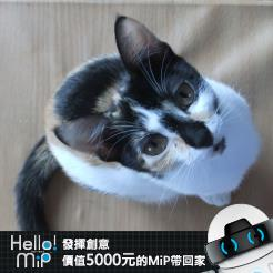 【HELLO MiP】神人級創意玩法大募集! Liliy Huang