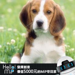【HELLO MiP】神人級創意玩法大募集! 欣汝 謝