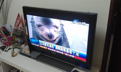【大運99超級任務】32-正在看的電視節目 ITing Hsieh