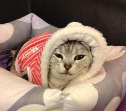 【大運99超級任務】49-寵物沾喜氣 何 嘉琪
