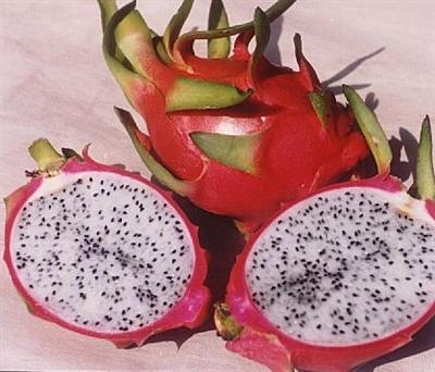 【大運99超級任務】51-水果 Hsiu Yu