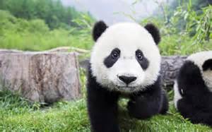 【粉多奇想】最想要的動物能力 Amber Chang