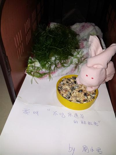 【粉多兔寶寶】DIY!看手巧不巧 小君劉