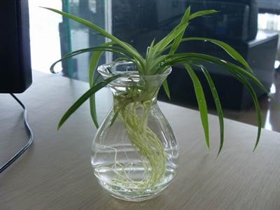盆栽植物名称