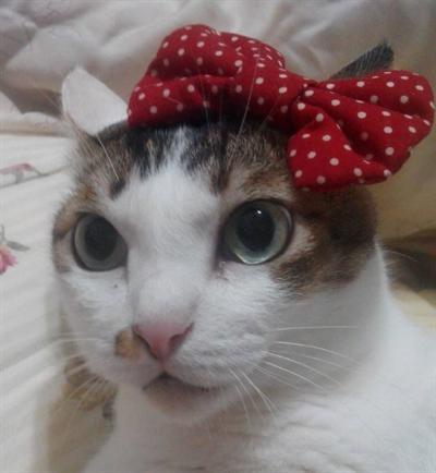 【粉多徵友趣】貓貓扮Kitty,可愛萬人迷! 黃筱布