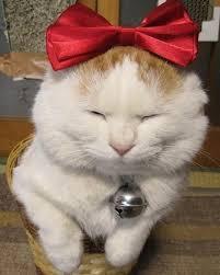 【粉多徵友趣】貓貓扮Kitty,可愛萬人迷! Vent Lee