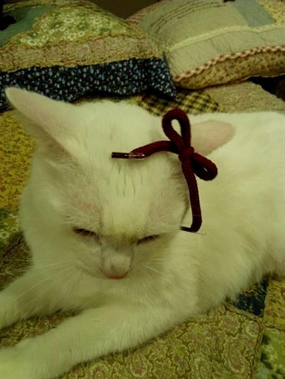 【粉多徵友趣】貓貓扮Kitty,可愛萬人迷! 筑雅 張