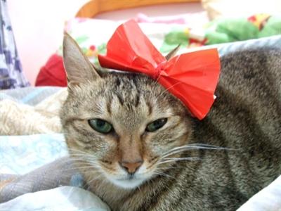 【粉多徵友趣】貓貓扮Kitty,可愛萬人迷! KeiHou Lin