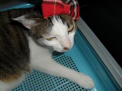 【粉多徵友趣】貓貓扮Kitty,可愛萬人迷! 薇茵 洪