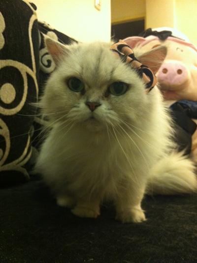 【粉多徵友趣】貓貓扮Kitty,可愛萬人迷! NewWay