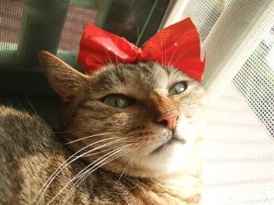 【粉多徵友趣】貓貓扮Kitty,可愛萬人迷! 喵亞 喵