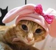 【粉多徵友趣】貓貓扮Kitty,可愛萬人迷! Chen Conniet