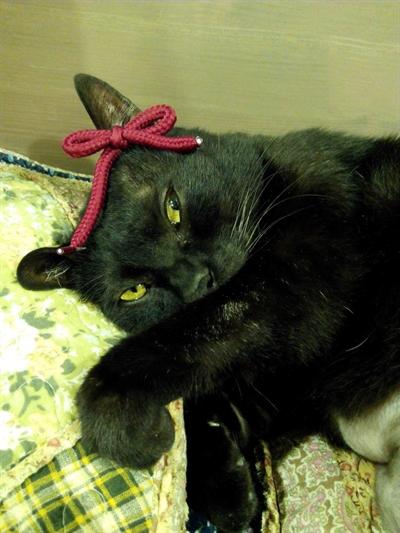 【粉多徵友趣】貓貓扮Kitty,可愛萬人迷! 宗舜 許