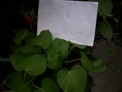 【樂活栽-幸福有機職人】有機當令蔬果學 黃 國鑫