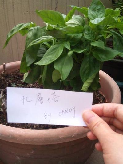 【樂活栽-幸福有機職人】有機當令蔬果學 Candy Fu