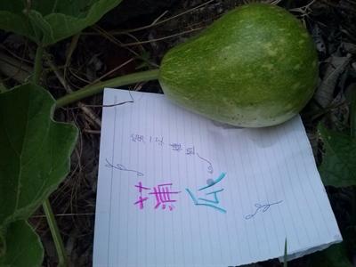 【樂活栽-幸福有機職人】有機當令蔬果學 于慧郭
