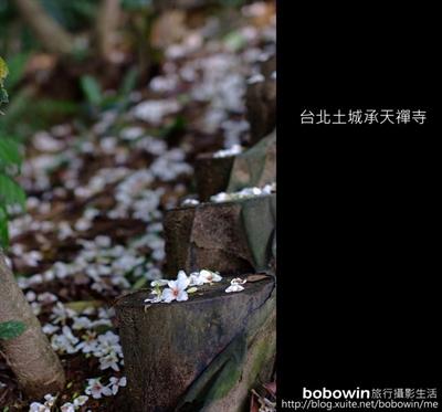 【粉多小旅行】2014桐花季-全台灣賞桐花最美路線推薦 博文 柯