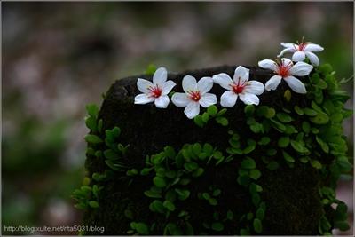 【粉多小旅行】2014桐花季-全台灣賞桐花最美路線推薦 南 柯