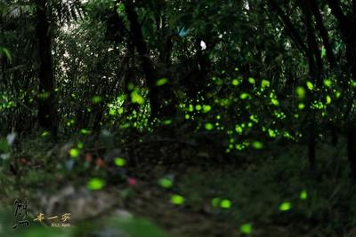 【粉多小旅行】推薦: 2014全台灣賞螢火蟲最佳景點-懶人包 Chen-YuanWu