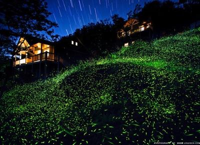 【粉多小旅行】推薦: 2014全台灣賞螢火蟲最佳景點-懶人包 Smith Tom