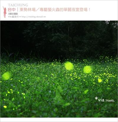 【粉多小旅行】推薦: 2014全台灣賞螢火蟲最佳景點-懶人包 千驊 黃