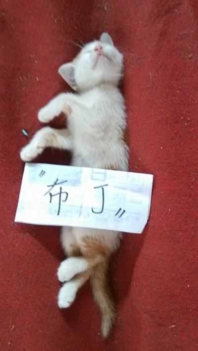 【粉多寵物】最可愛寵物睡姿大募集 瀞文張