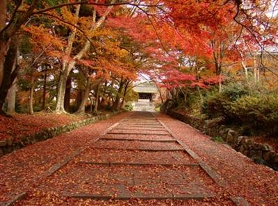 【粉多旅遊】好秋旅行,日本賞楓旅行推薦地點 錦 胡