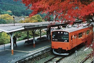 【粉多旅遊】好秋旅行,日本賞楓旅行推薦地點 花花 呂