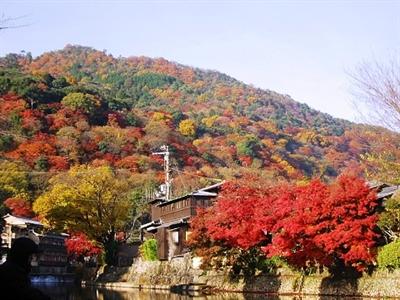 【粉多旅遊】好秋旅行,日本賞楓旅行推薦地點 Tin Tin