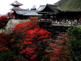 【粉多旅遊】好秋旅行,日本賞楓旅行推薦地點 LiouKakie