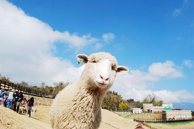 【粉多旅遊】台灣野餐地點懶人包 陳珮漩