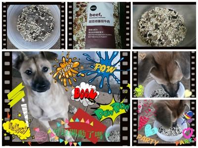 【1分鐘狗狗鮮食-輕寵食】狗不理包子,只理輕寵食 Regina Lin