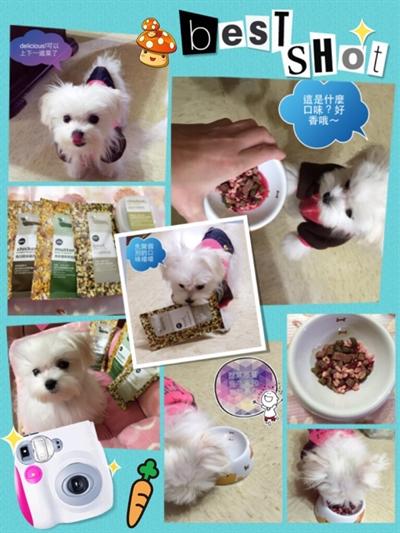 【1分鐘狗狗鮮食-輕寵食】狗不理包子,只理輕寵食 Patty Zen