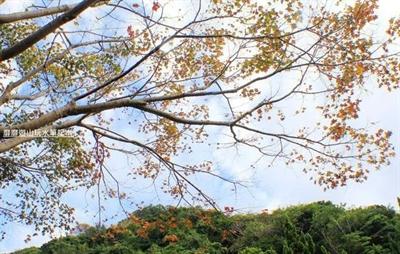 【粉多小旅行】2014台灣楓葉季 – 賞楓必遊景點推薦 AiChi Su