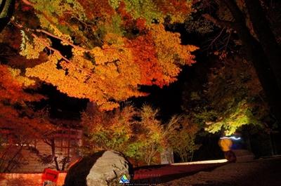 【粉多小旅行】2014台灣楓葉季 – 賞楓必遊景點推薦 花 花