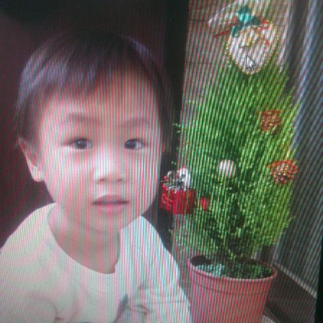 捕捉全台野生聖誕樹  Ashe Yen