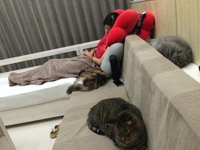 陪睡寵物寶貝大集合 ShiKuo