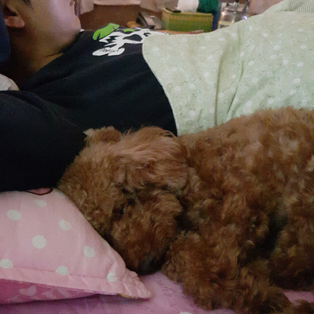 陪睡寵物寶貝大集合 ChiYen
