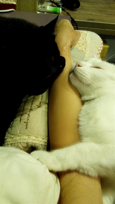 陪睡寵物寶貝大集合 Amber Chang