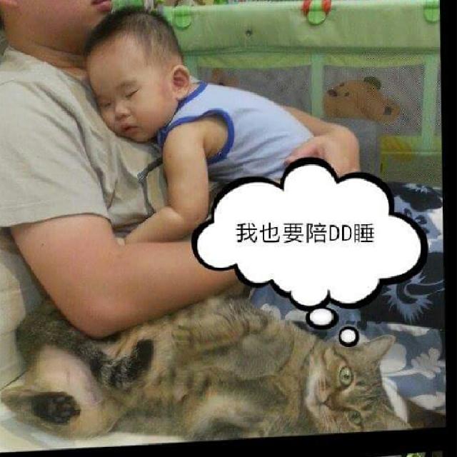 陪睡寵物寶貝大集合  張曉涵