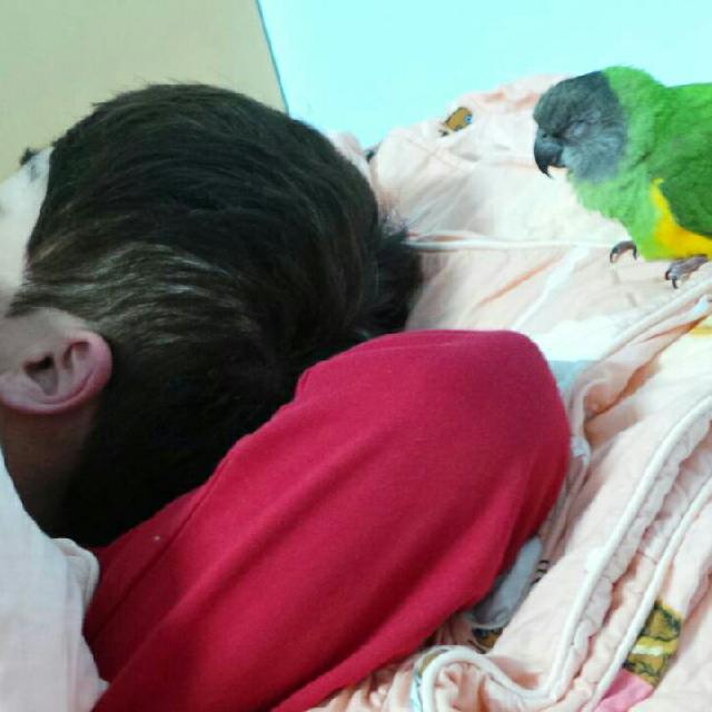 陪睡寵物寶貝大集合  陳玉麗