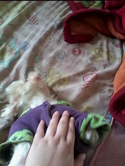 陪睡寵物寶貝大集合 婷李