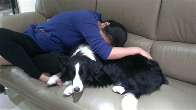 陪睡寵物寶貝大集合 Iris Lee