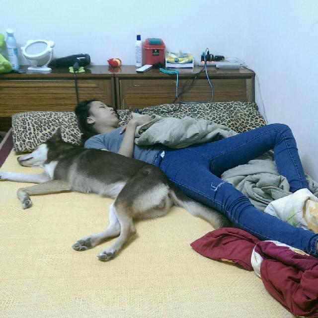 陪睡寵物寶貝大集合  Terry Hong