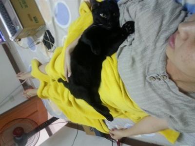陪睡寵物寶貝大集合 Yu Chao Lin
