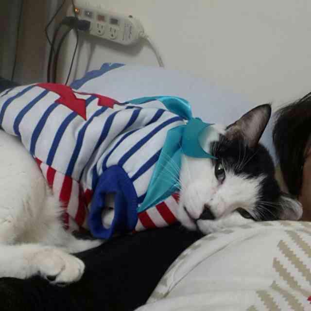 陪睡寵物寶貝大集合 Yi-Yu Jhou