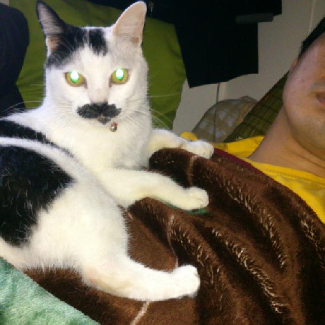 陪睡寵物寶貝大集合 DaisyChuang