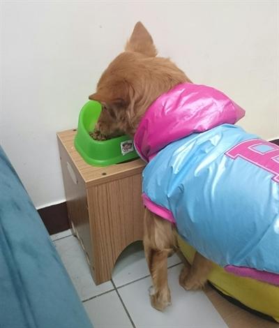 【1分鐘狗狗鮮食-輕寵食】狗狗101大哉問 Jian Dianne