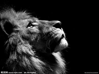 【粉多黃金12宮】獅子座的使用說明書 安倫蔣