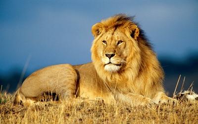 【粉多黃金12宮】獅子座的使用說明書 Guanzhi Yu